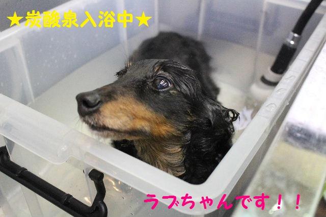 素潜り~!!_b0130018_746253.jpg