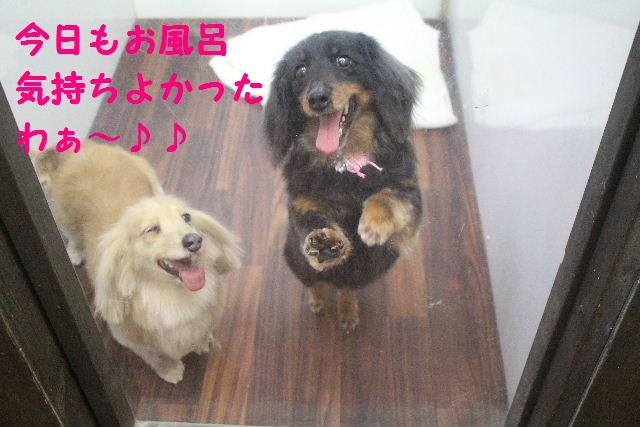 素潜り~!!_b0130018_7472939.jpg