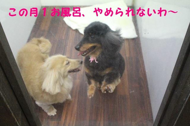 素潜り~!!_b0130018_7473873.jpg