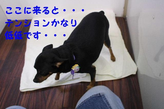 素潜り~!!_b0130018_7485069.jpg