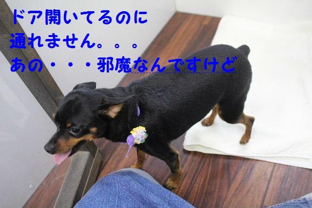 素潜り~!!_b0130018_7485837.jpg
