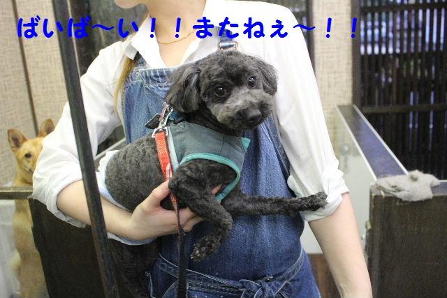 素潜り~!!_b0130018_7511789.jpg