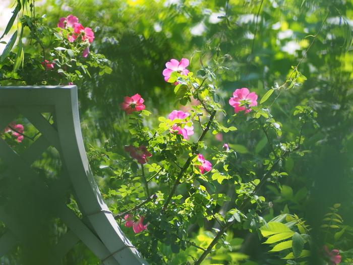 初夏の色_e0169421_21175865.jpg