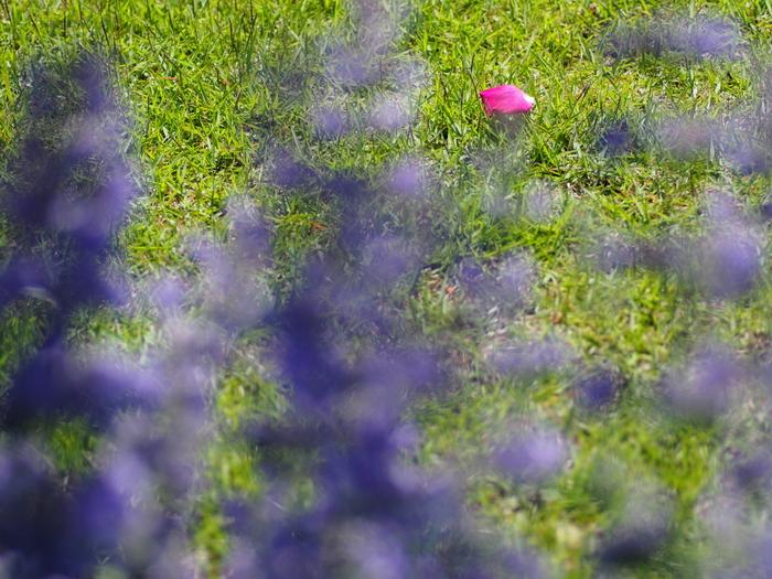 初夏の色_e0169421_21184846.jpg