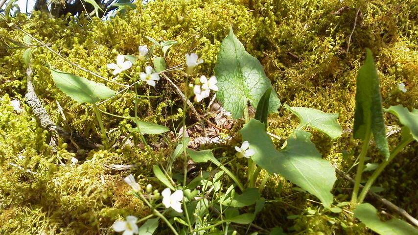 5月22日。朝の気温7℃。下山道でフデリンドウがバッチリ咲いてました。_c0089831_1465838.jpg