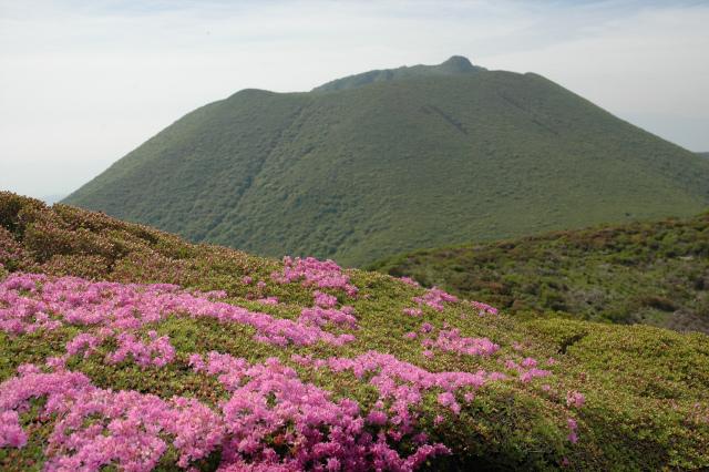 平治岳&北大船山&大船山! ミヤマキリシマは一分咲き!_e0272335_19541146.jpg