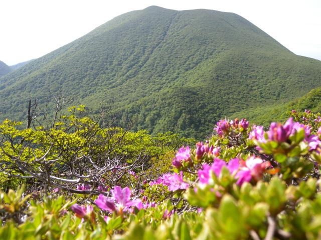 平治岳&北大船山&大船山! ミヤマキリシマは一分咲き!_e0272335_21112040.jpg