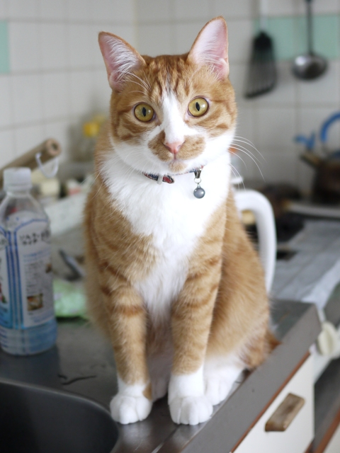 猫のお留守番 こたびくんしっぽなちゃん編。_a0143140_21174444.jpg