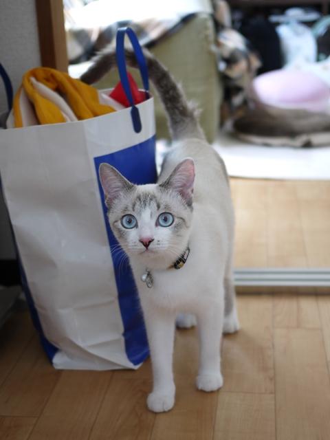 猫のお留守番 こたびくんしっぽなちゃん編。_a0143140_21183061.jpg