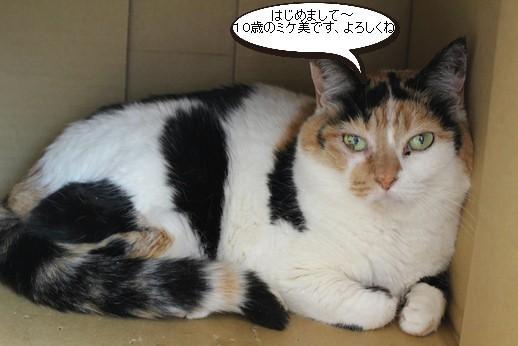新入り保護猫さんは10歳_e0151545_20570808.jpg
