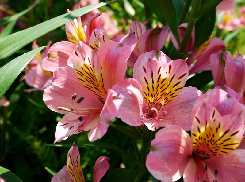 五月の花 (2)終_b0093754_20331361.jpg