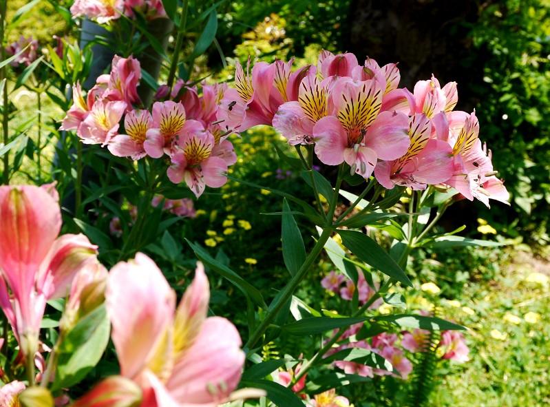 五月の花 (2)終_b0093754_2033271.jpg