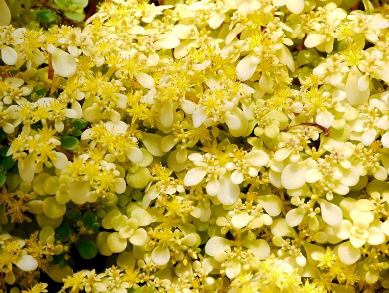 五月の花 (2)終_b0093754_20334345.jpg