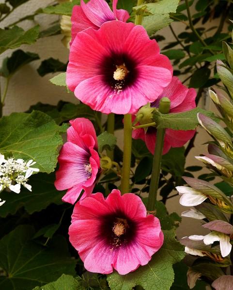 五月の花 (2)終_b0093754_20343452.jpg