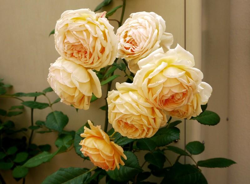 五月の花 (2)終_b0093754_20352190.jpg
