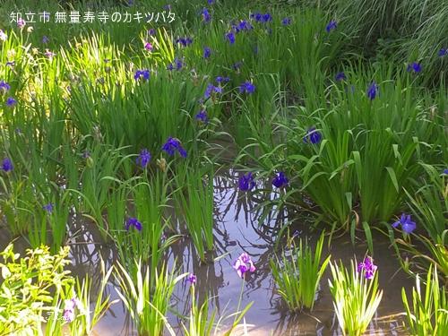 京都 八つ橋の由来はここ_c0108065_1035769.jpg