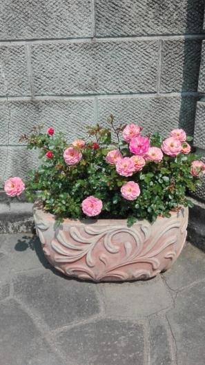 晴天続きのおかげ?花が長く楽しめます。_e0356469_22531363.jpg