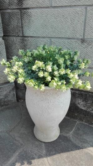 晴天続きのおかげ?花が長く楽しめます。_e0356469_22531876.jpg