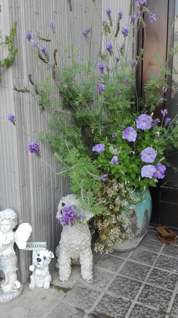 晴天続きのおかげ?花が長く楽しめます。_e0356469_22533470.jpg