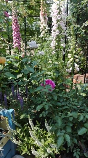 晴天続きのおかげ?花が長く楽しめます。_e0356469_22573538.jpg