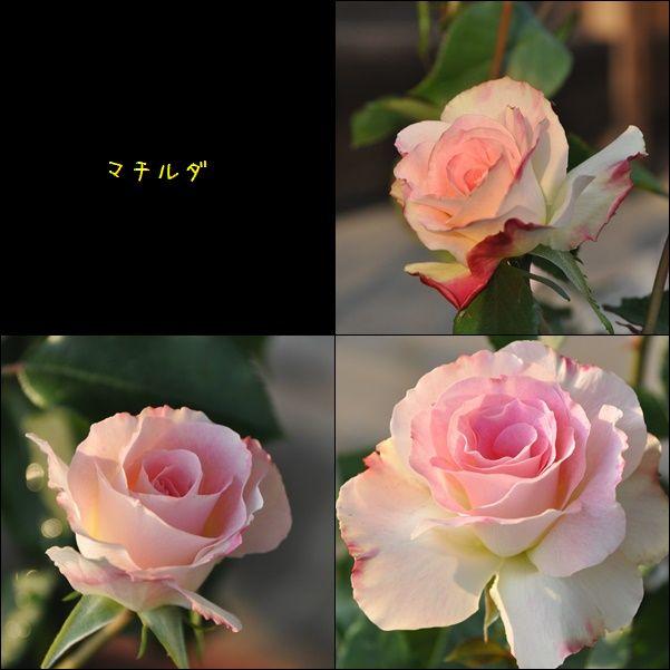 e0234881_2253559.jpg