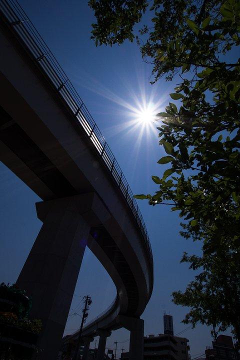 マグレブ鉄道沿線の光蜥蜴_d0353489_19221929.jpg