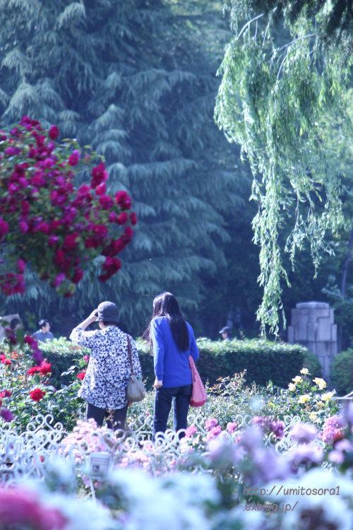 薔薇の向こうに_b0324291_10535576.jpg