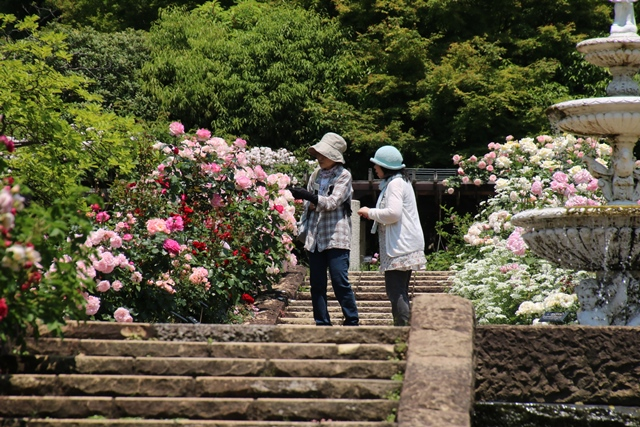 オバマ大統領の広島訪問の意義、英断に感動・・・北山緑化植物園の美しいバラ_d0181492_21112160.jpg