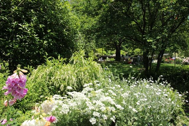 藤田八束のガーデニング写真@兵庫県西宮市にある北山緑化植物園のバラ・・・美しいバラ園紹介_d0181492_21304771.jpg