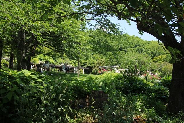 藤田八束のガーデニング写真@兵庫県西宮市にある北山緑化植物園のバラ・・・美しいバラ園紹介_d0181492_2131136.jpg
