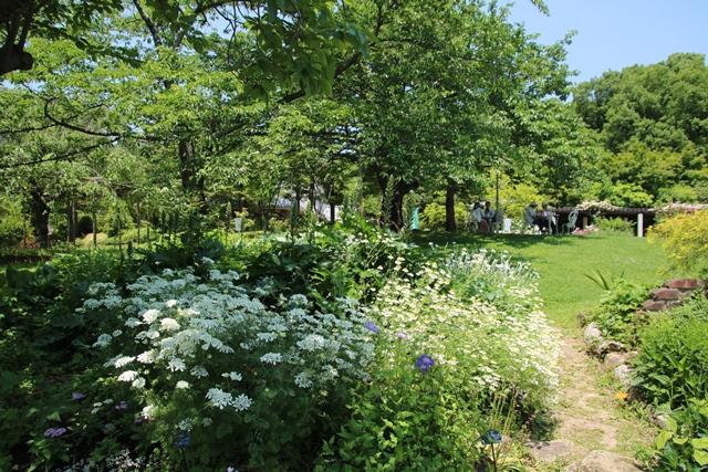 藤田八束のガーデニング写真@兵庫県西宮市にある北山緑化植物園のバラ・・・美しいバラ園紹介_d0181492_21313799.jpg