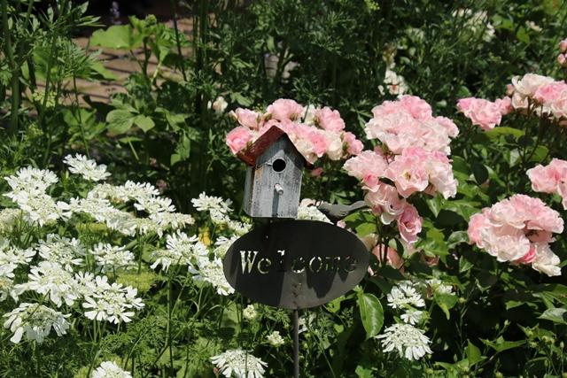オバマ大統領の広島訪問の意義、英断に感動・・・北山緑化植物園の美しいバラ_d0181492_2143992.jpg