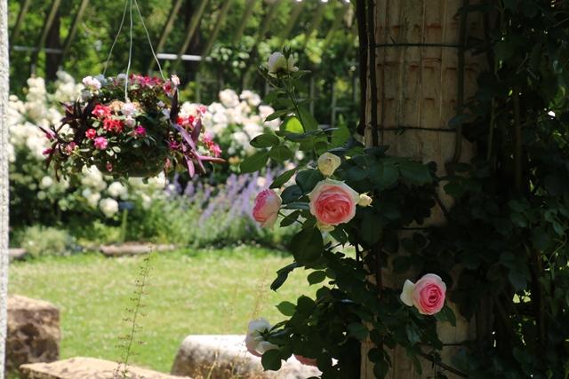 オバマ大統領の広島訪問の意義、英断に感動・・・北山緑化植物園の美しいバラ_d0181492_2152670.jpg
