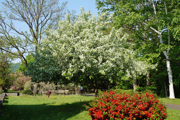 緑景色・・2_d0162994_9404463.jpg