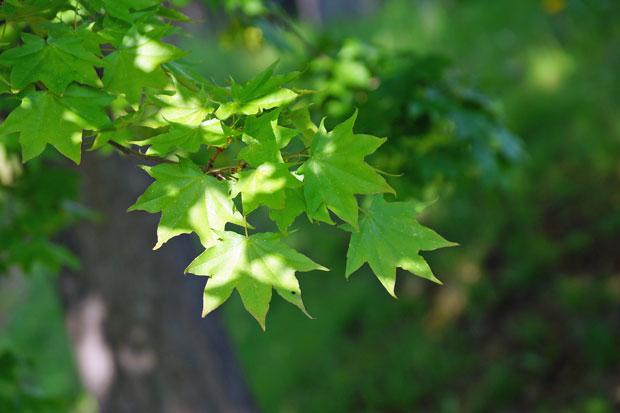 緑景色・・2_d0162994_9423595.jpg