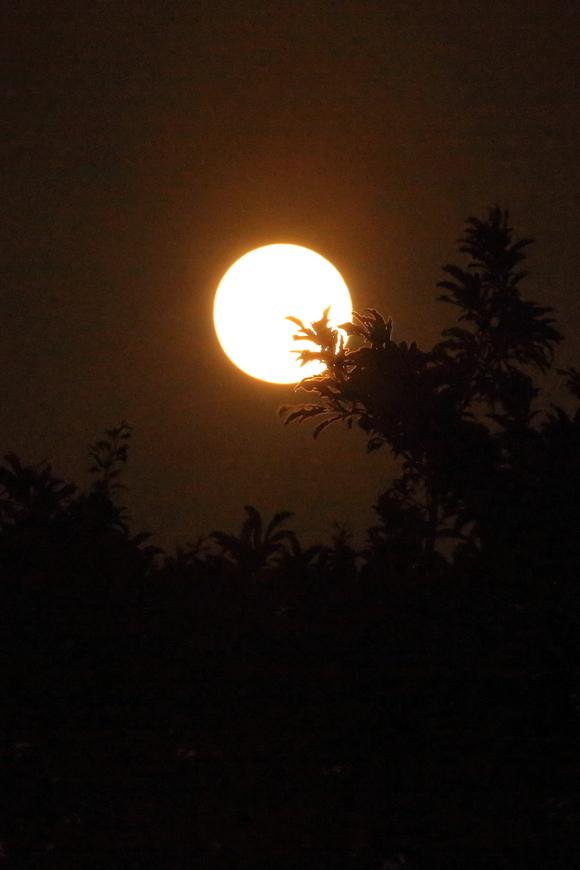 満月♪_b0275998_20432676.jpg