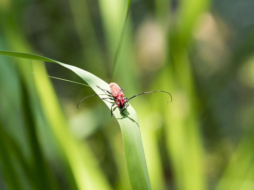 トンボ沼 その他の昆虫たち_f0324026_210643.jpg