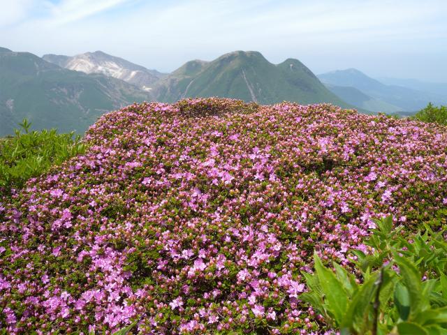 平治岳&北大船山&大船山! ミヤマキリシマは一分咲き!_e0272335_11252655.jpg