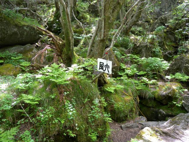 平治岳&北大船山&大船山! ミヤマキリシマは一分咲き!_e0272335_12233870.jpg