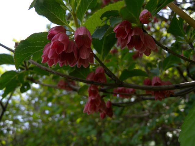 平治岳&北大船山&大船山! ミヤマキリシマは一分咲き!_e0272335_1273975.jpg