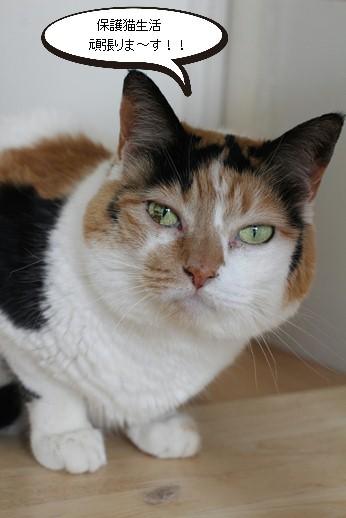 10歳保護猫さん、落ち着いてきたかな_e0151545_21352872.jpg