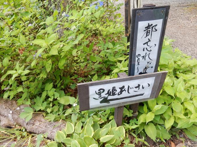'16,5,23(月)花野辺の里に行って来たYO!_f0060461_18155147.jpg