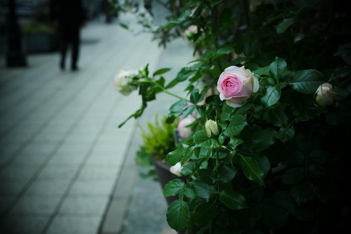 神戸 元町 スナップ _f0021869_22352580.jpg