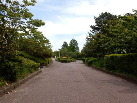 初夏の「のんコレ」と公園散歩_e0355177_12305011.jpg