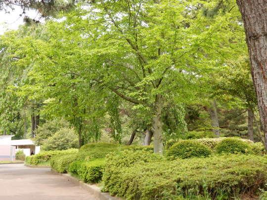 初夏の「のんコレ」と公園散歩_e0355177_12341722.jpg