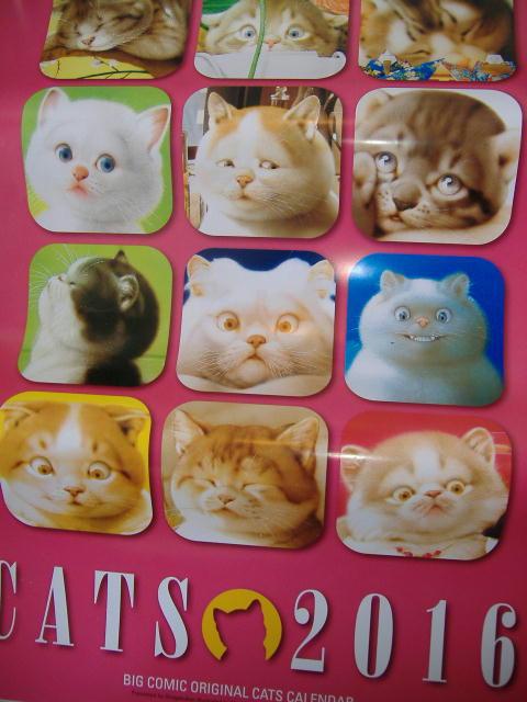 【犬さんカレンダー&猫さんカレンダー あと7枚・・・!?】_c0328479_21192760.jpg