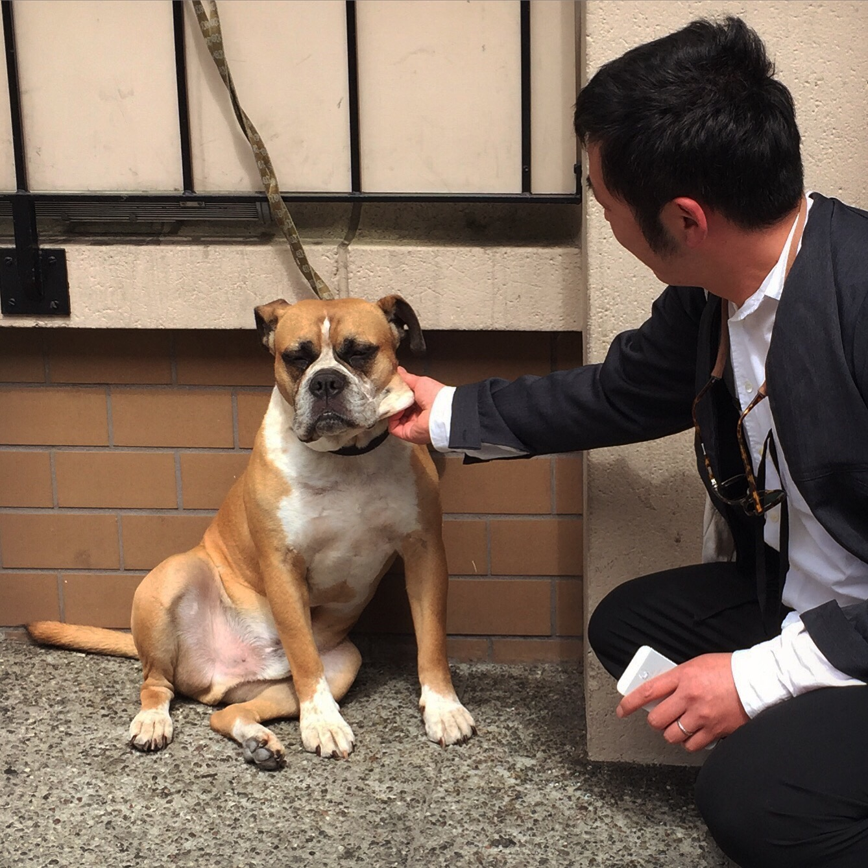 犬とYシャツと_f0170995_2194324.jpg