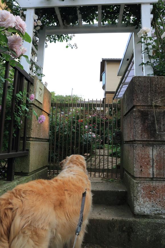 薔薇のお屋敷♪_b0275998_1021547.jpg