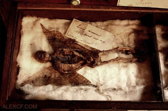 謎のトーマス・マーリン博物館:実は興味深いのはそのマーリンそのものだった!_a0348309_8305340.jpg