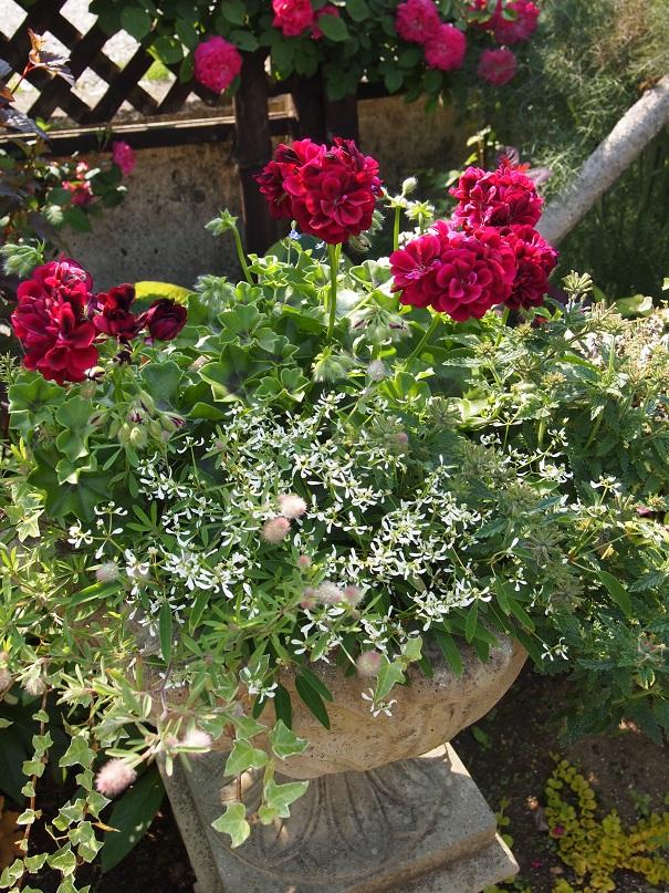 2016 茨城のお庭その3 _c0167112_782274.jpg